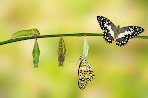 Butterfly-transition 2